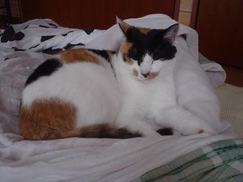 2010Oct26-Donna2.jpg
