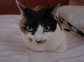 2010Oct28-Donna.jpg