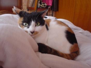 2010Oct31-Donna1.jpg
