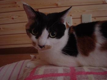 2010Sep28-Donna1.jpg