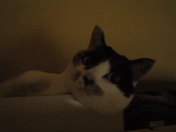 2011Apr14-Donna1.jpg