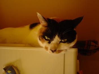 2011Apr16-Donna6.jpg