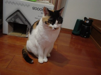 2011Apr16-Donna8.jpg
