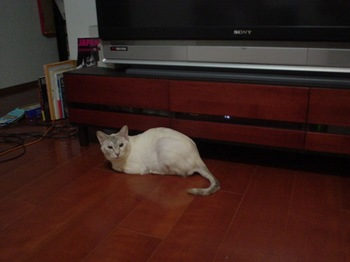 2011Apr25-Sunny1.jpg