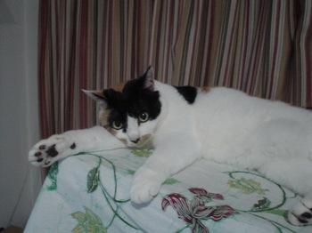 2011Apr27-Donna3.jpg