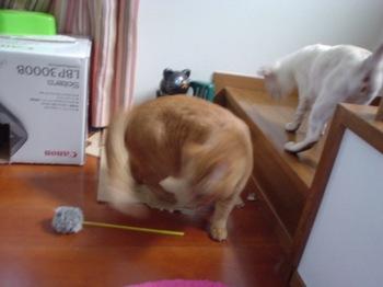 2011Apr28-Sunny&Ram.jpg