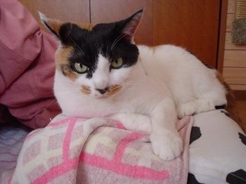 2011Apr29-Donna2.jpg