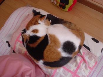 2011Apr29-Donna3.jpg