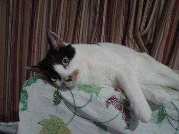 2011Apr29-Donna4.jpg