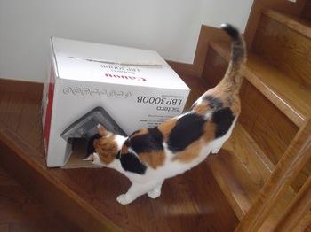 2011Apr30-Donna4.jpg