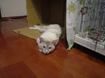 2011Apr30-Sunny6.jpg