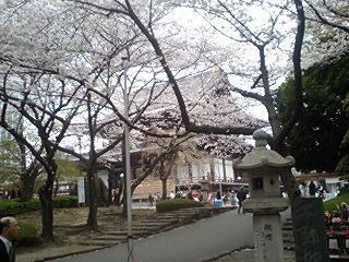 2011Apr8-Sakura3.jpg