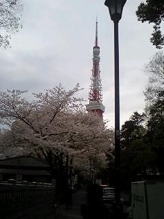 2011Apr8-Sakura4.jpg