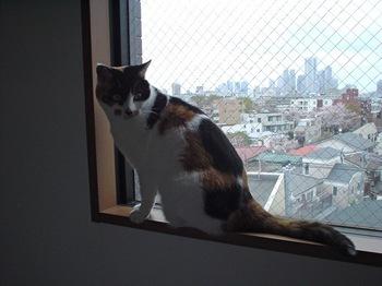 2011Apr9-Donna1.jpg