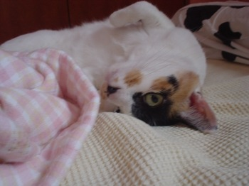2011Aug23-Donna1.jpg