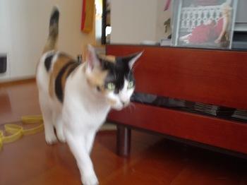 2011Aug23-Donna3.jpg