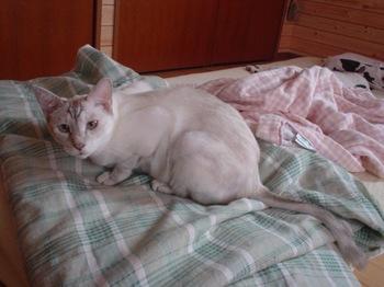 2011Aug23-Sunny2.jpg
