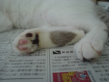 2011Aug28-Asumo3.jpg