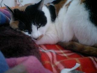 2011Jan22-Donna1.jpg