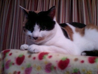 2011Jan22-Donna2.jpg