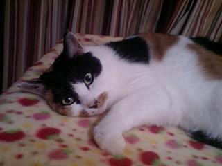 2011Jan23-Donna4.jpg