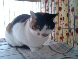 2011Jan26-Donna1.jpg