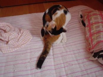 2011Jul24-Donna2.jpg