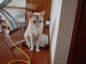 2011Jul24-Sunny1.jpg