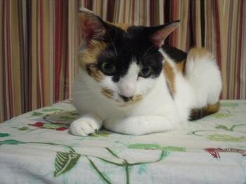 2011Jul30-Donna1.jpg
