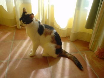 2011Jul30-Donna5.jpg