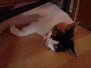 2011June25-Donna1.jpg
