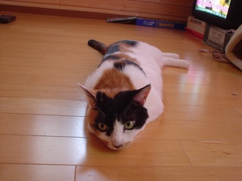 2011June25-Donna2.jpg