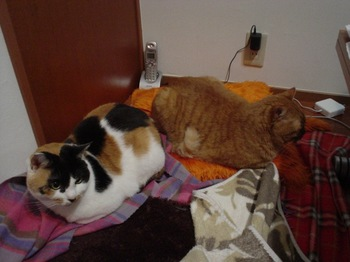 2011Mar23-Ram&Donna.jpg