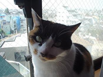 2011Mar26-Donna4.jpg