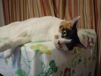 2011May22-Donna1.jpg
