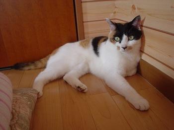 2011May22-Donna4.jpg