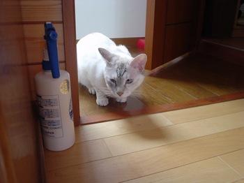 2011May23-Sunny2.jpg