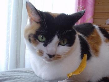 2011May25-Donna4.jpg
