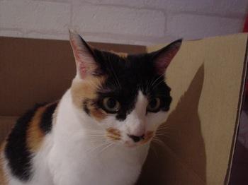 2011May27-Donna1.jpg