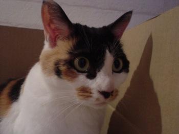 2011May27-Donna2.jpg