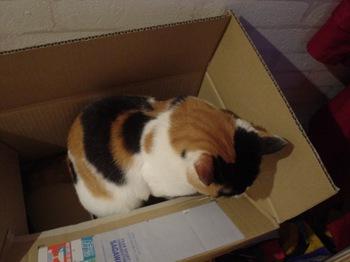 2011May27-Donna3.jpg