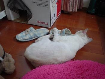 2011May27-Sunny1.jpg