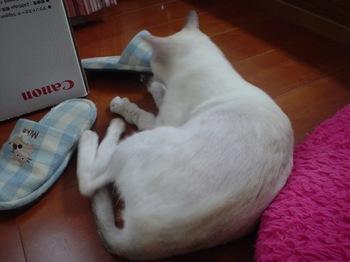 2011May27-Sunny2.jpg