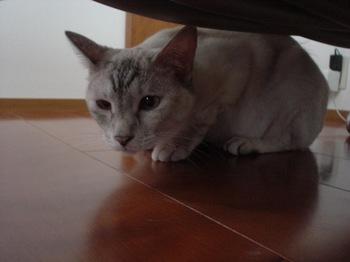 2011May27-Sunny5.jpg