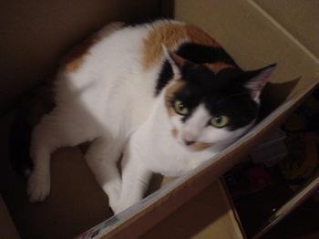 2011May28-Donna3.jpg