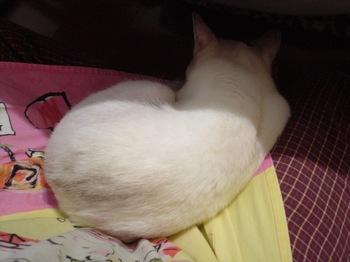 2011May30-Sunny2.jpg