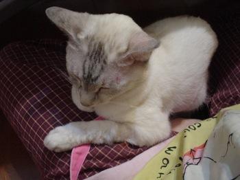 2011May31-Sunny3.jpg