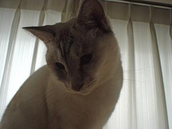 2011Nov10-Sunny1.jpg