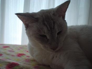 2011Oct17-Sunny8.jpg