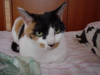 2011Oct19-Donna3.jpg